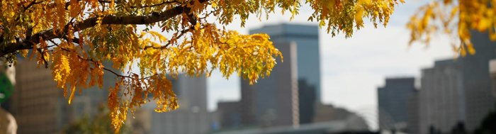 Photo of fall campus colors.