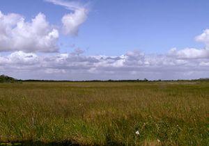 Photo of Everglades